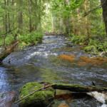 Река Быстрянка